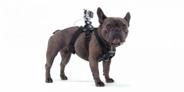 gopro-dog-harness-стойка-за-куче-маунт-mount-екшън-камера-спортна-видео-10